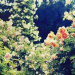 お釈迦様の誕生日を祝う「花まつり」