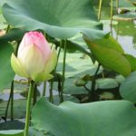 浄土や極楽は本当にあるのか、温泉はあるのか|仏教で教えられる極楽浄土