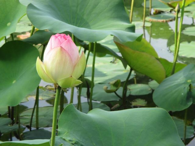 浄土や極楽は本当にあるのか、温泉はあるのか|仏教で教えられる極楽 ...