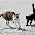 ネコが魚を好きなのは仏教の影響?|なぜネコと魚が結びつくのか