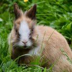 月のウサギはお釈迦様?|月にウサギがいると言われる理由