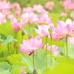 往生は誤解された言葉|仏教に教えられる本来の意味とは?